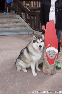 Travel dog- wizyta u św. Mikołaja