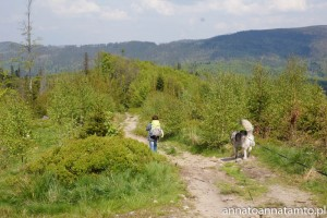 Travel dog -Beskidy