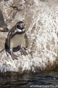 Pingwinie komando