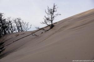 Wydma Łącka-podejście