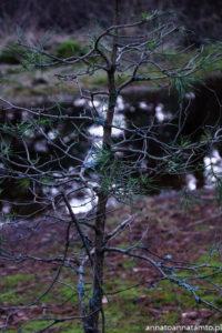 Wydma Łącka-droga do wydmy