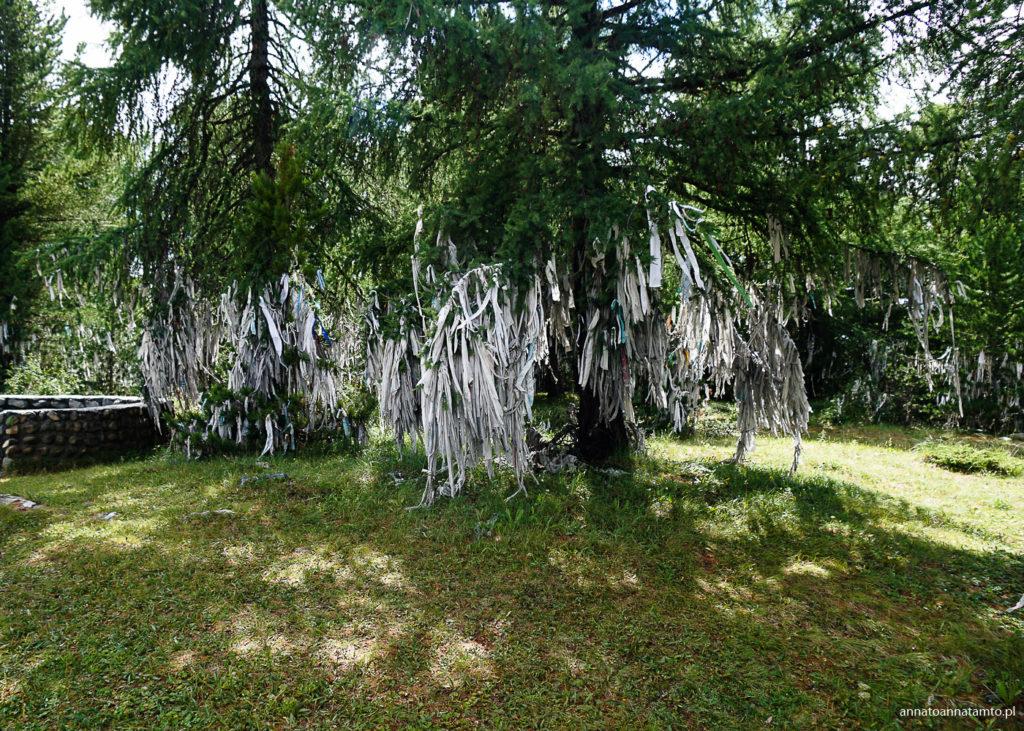 drzewa kosz-agacz (kom-agacz)